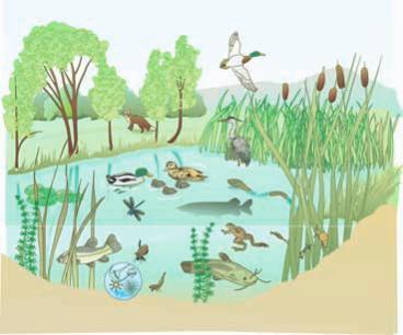 Page 39 120900031459 bocchi produzionivegetali for Ecosistema dello stagno